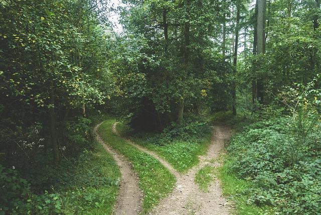 Przydrożna zieleń - konkurs