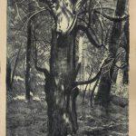 Cis L. Wyczółkowskiego, 1931