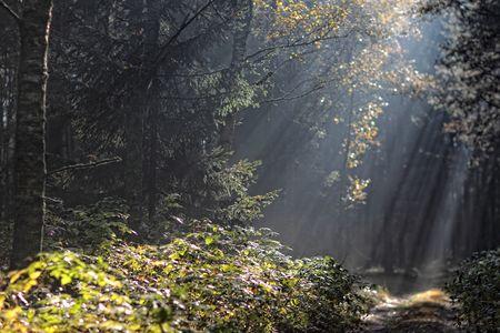 Park Krajobrazowy Góry Łosiowe