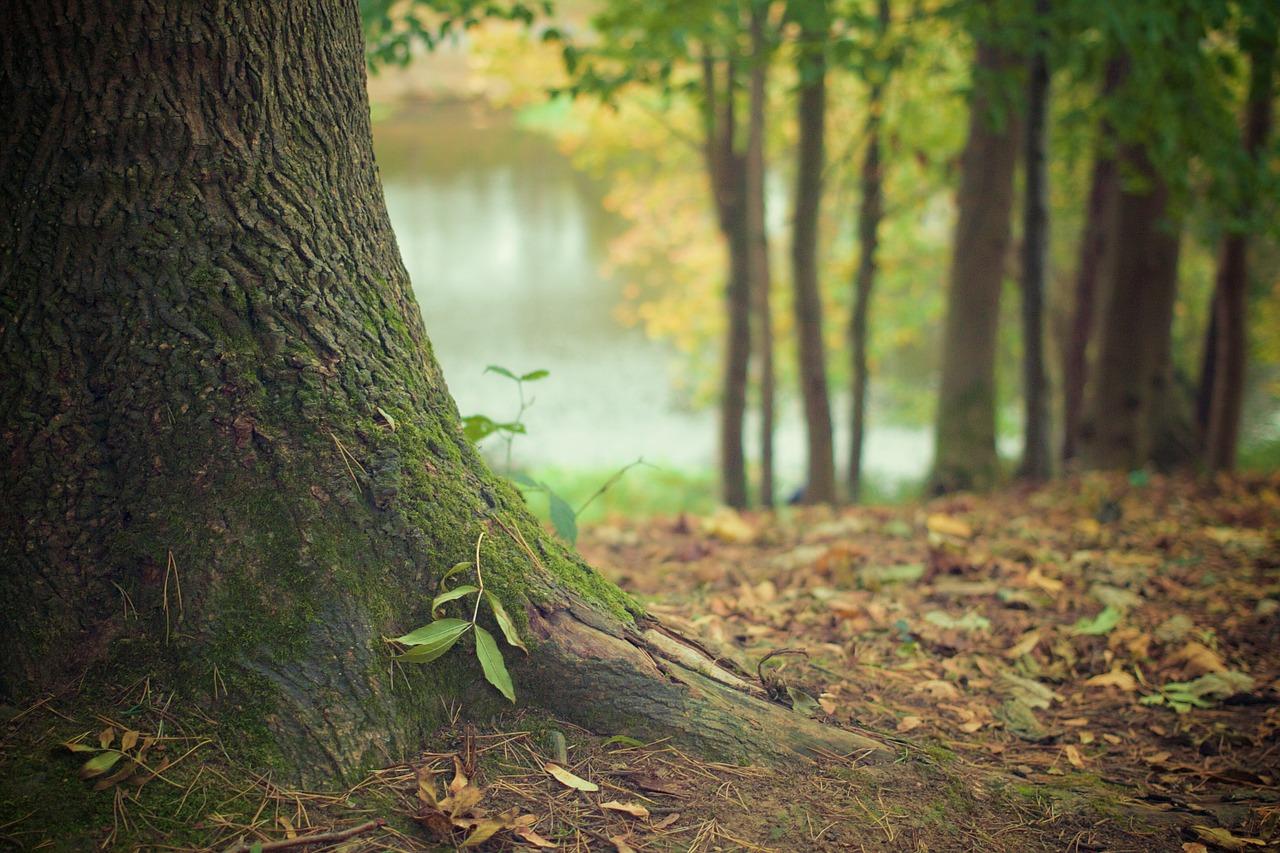 Konkurs z wiedzy leśnej