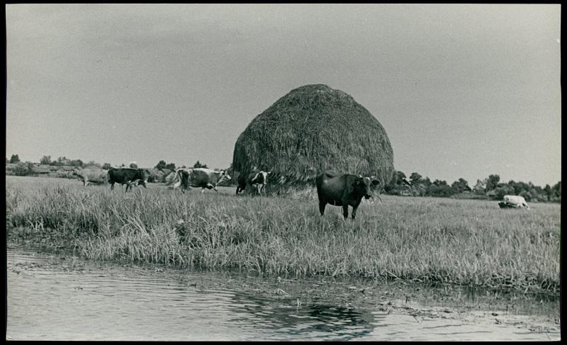 Krajobraz poleski nad Piną, lata 30., fot. H. Poddębski, BN