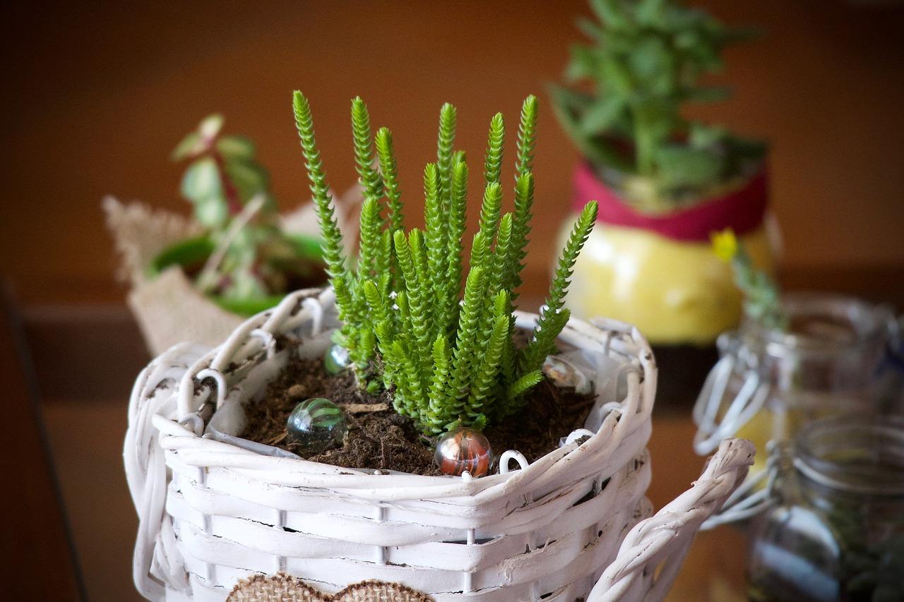 Miniaturowy ogródek