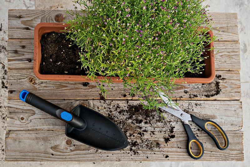 Sadzenie roślin na balkonie