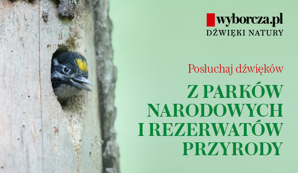 Wyborcza.pl: Dźwięki natury