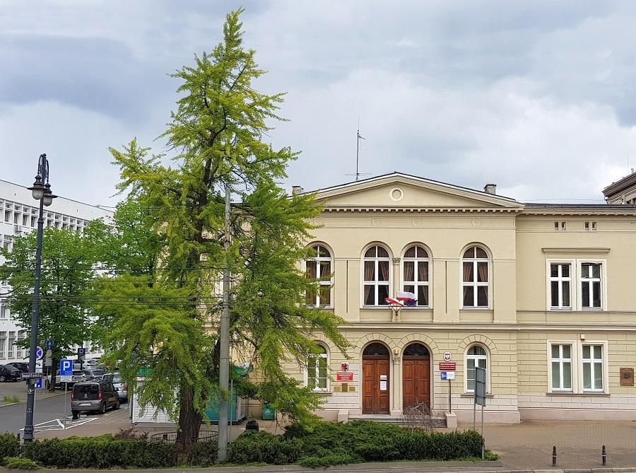 Fot. Miłorząb przed budynkiem KPCEN-u w Bydgoszczy