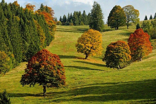 Drzewa jesienią