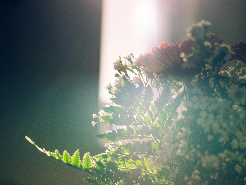 Warsztaty florystyczne na Wszystkich Świętych