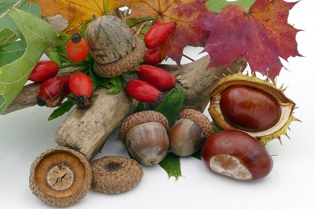 skarby jesieni - żołędzie, kasztany, owoce dzikiej róży i kolorowe liście